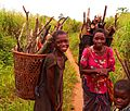 Basankusu collecting firewood by Francis Hannaway.jpg