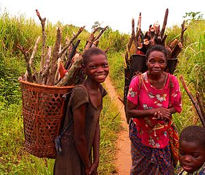 Basankusu collecting firewood by Francis Hannaway