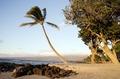 Beach scene on the island of Oahu, Hawaii LCCN2010630473.tif