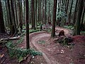 Bear DH trail. Some banked curves. - panoramio.jpg
