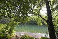 Beauty of National Park Biogradska Gora, Montenegro 05.jpg
