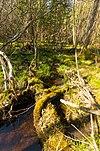 Beaver Creek.jpg