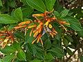 Bee and orange flower 1.jpg