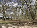 Beech trees - early spring - geograph.org.uk - 527898.jpg