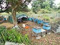 Beekeeping in Hainan - 01.jpg