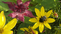 Bees and Flowers 05.png
