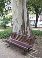 Bench by Eucalyptus (5941895300).jpg