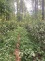 Benton MacKaye Trail near Wilscot.jpg