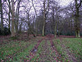Benwell's Wood - geograph.org.uk - 106279.jpg