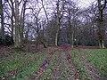 Benwell's Wood - geograph.org.uk - 106279.jpg