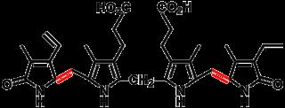 Bilin (biochemistry) class of chemical compound