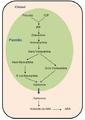 Biosíntesis de ácido abscísico.PNG
