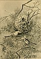 Bird life glimpses (1905) (14753008184).jpg