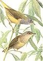Birds of America; (1923) (20358207976).jpg