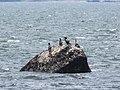 Birds on rock, Castine, Maine image 2.jpg