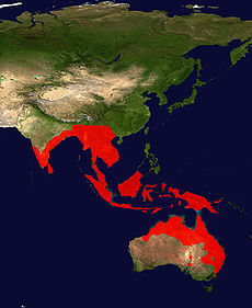 Black-Necked Stork Range Map.jpg