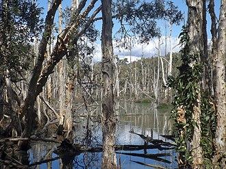 Murrumba Downs, Queensland - Black Duck Creek, 2016