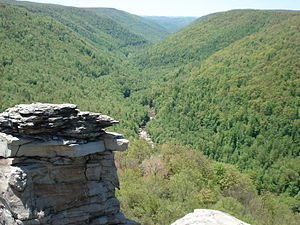 Monongahela National Forest - Blackwater Canyon