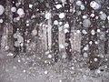Blizzard in Bulduri forest - panoramio.jpg