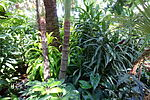 Bloedel Floral Conservatory, Queen Elizabeth Park - Vancouver, Canada - DSC07511.JPG