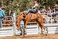Boddington Rodeo 2015 (128247367).jpeg