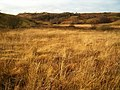 Boggy Grassland - geograph.org.uk - 91678.jpg