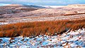 Boggy ground on West Baugh Fell - geograph.org.uk - 14650.jpg