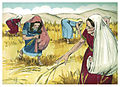 Book of Ruth Chapter 2-12 (Bible Illustrations by Sweet Media).jpg