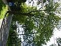 Bornem Branstsedreef Gemengde dreef (5) - 230356 - onroerenderfgoed.jpg