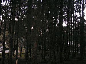 Macarao National Park - Image: Bosque del PN Macarao