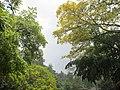 Botanic Gardens - panoramio (2).jpg