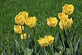 Botanic garden - Cluj-Napoca (4543606701).jpg