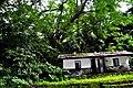 Botanic garden limbe103.jpg