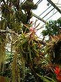 BotanischerGartenPotsdam Epiphytenhaus0706a.JPG
