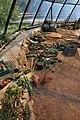Botanischer Garten der Universität Zürich - Kuppel - Innenansicht 2011-08-21 14-03-00.JPG