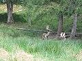 Boutissaint-fallow deers1-28-08-17.jpg