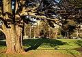 Bowling green, Torquay - geograph.org.uk - 1076581.jpg