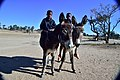 Boys on donkeys, Andriesvale, Kalahari, Northern Cape, South Africa (19917646443).jpg