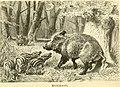 Brehms Tierleben; allgemeine kunde des thierreichs. Mit 1910 abbildungen im text, 11 karten und 180 tafeln in farbendruck und holzschnitt. (1893) (20387018956).jpg