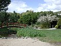 Bridge and Cherry Blossom in Miyazu Park, Nelson.jpg