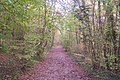 Bridleway in Blean Wood (2) - geograph.org.uk - 1559194.jpg