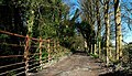 Broad Meadows Lane, Killyleagh - geograph.org.uk - 751672.jpg