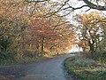 Buckland Wood by Leyland's Farm - geograph.org.uk - 89825.jpg