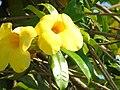 Bunga Kuning.jpg