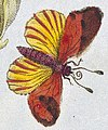 Butterfies in art of 1817, T. Green, The universal herbal. Wellcome L0025495 (cropped).jpg