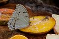 Butterfly at Chester Zoo 09.jpg