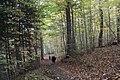 Buttermilk Falls - panoramio (5).jpg
