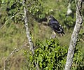 Bwindi Impenetrable National Park 06.jpg