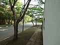 C99 - panoramio.jpg