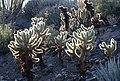 CA 2500 ANZA BORREGO (3-26-2016) plum wash, anza-borrego state park, san diego co, ca -05 (26237810986).jpg